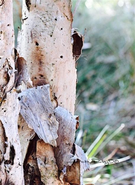 Woodland Inspiration, tree photo, art of being inspired, debiriley.com