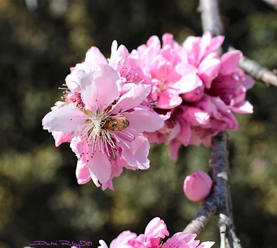 Spring season, photo, debiriley.com