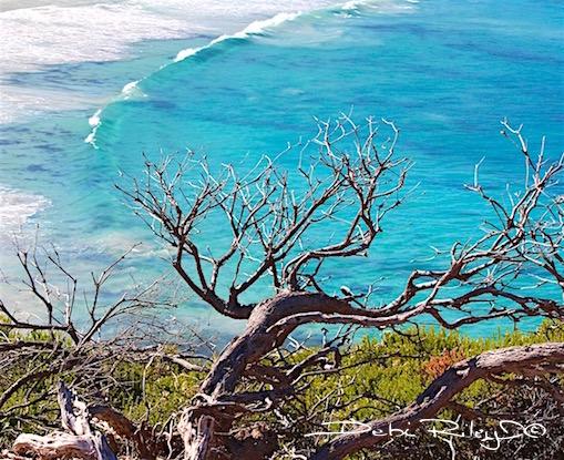 zen tree, patina of time, debiriley.com