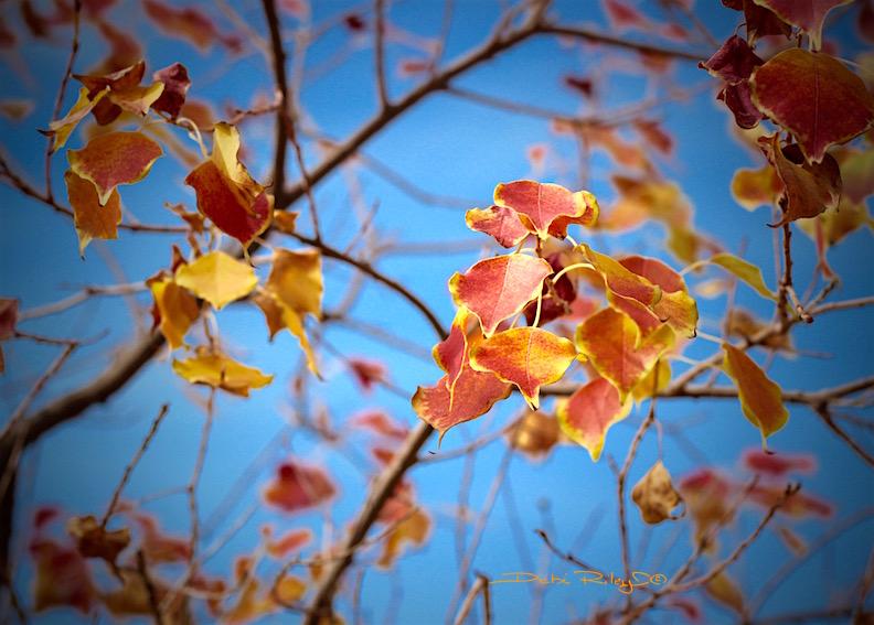 autumn comes, seasons, photo, debiriley.com