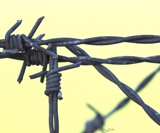 sharp edges are barriers, thorns of fire, barbs, photo, debiriley.com