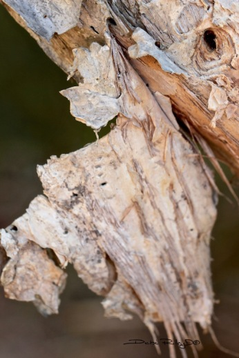 textures of paperbark, photo, debiriley.com