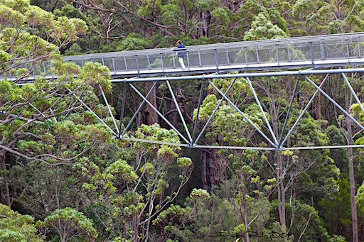 tree top walk, valley of the giants, forest, Perth, debiriley.com