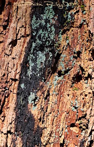 tree bark texture, debiriley.com