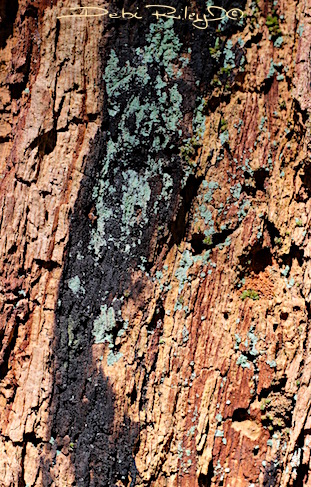tree bark texture, debiriley.com