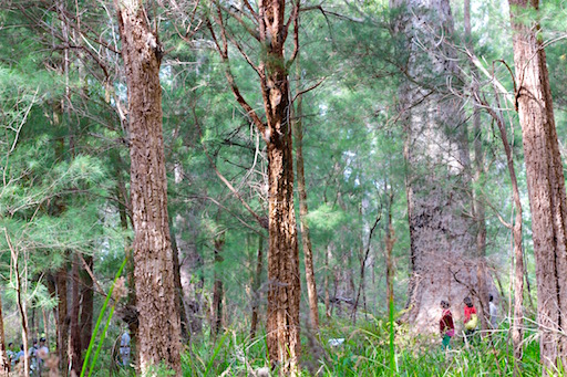 Tiny people, giant trees, forest in WA, debiriley.com