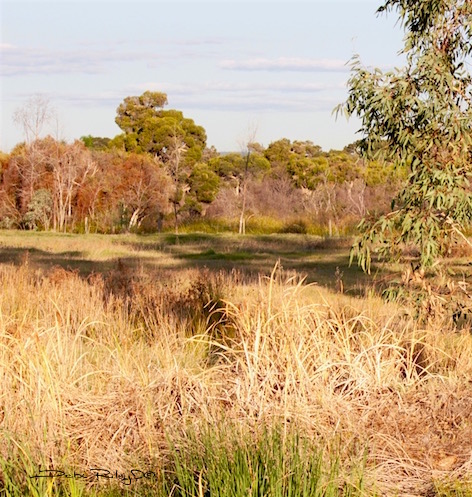 bushland oil painting, landscape, debiriley.com