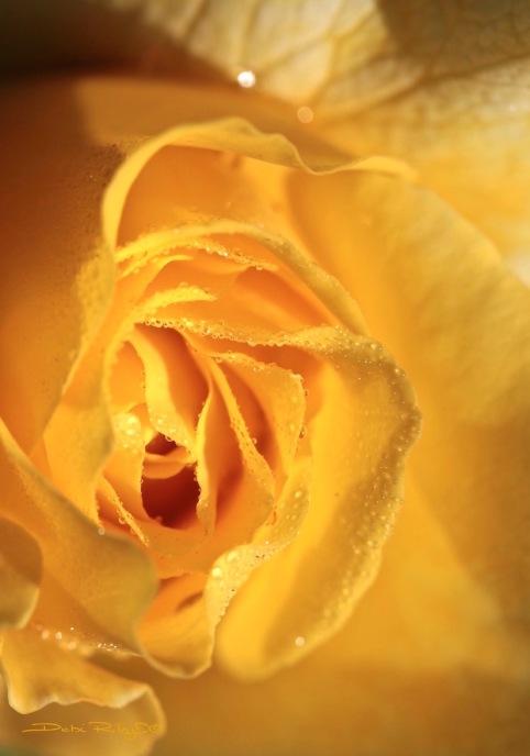 golden medley rose petals, debiriley.com