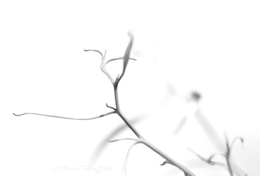 kanso, simplicity, wabi sabi zen, debiriley.com