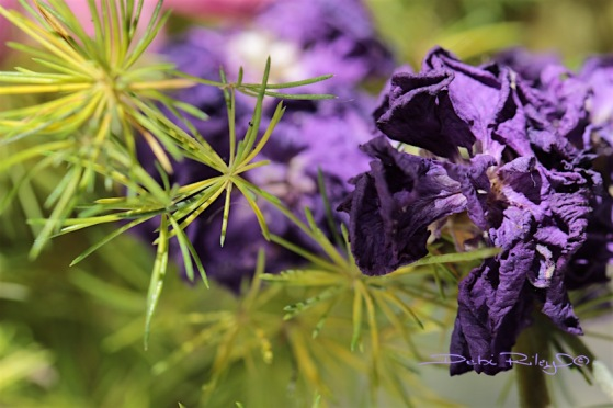 aged bouquet purple flowers, macro photo, debiriley.com