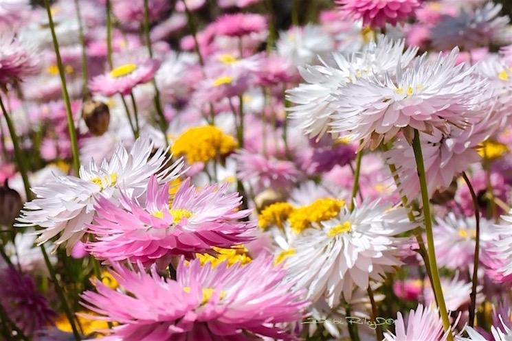 Medley of flowers, photo, debiriley.com