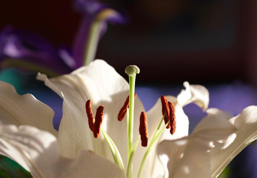macro flower Photography, debi riley art, Ansel Adams quotes,