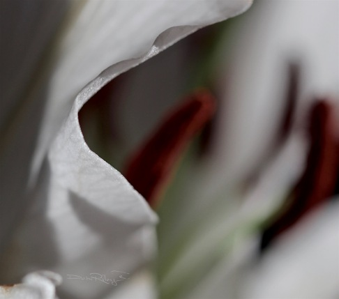 lily stamen macro photography, ansel adams inspiration quote, debi riley art