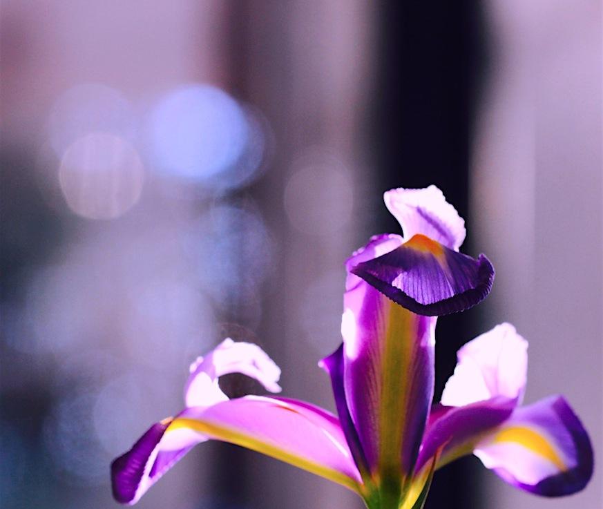The Iris: Faith, Valor,Wisdom