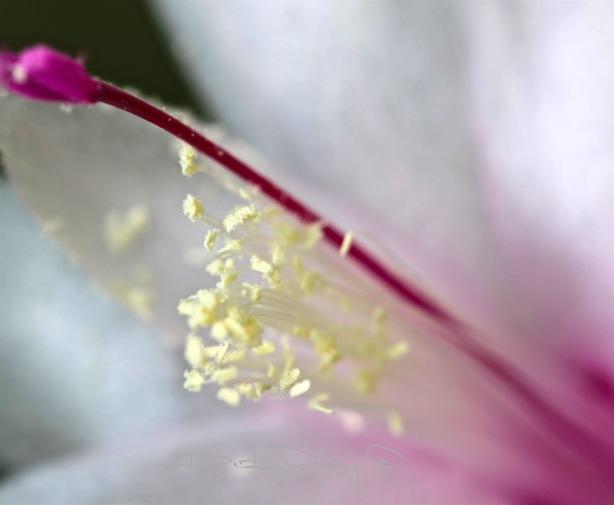 flower macro photograph, canon eos, 100mm lens, debi riley art