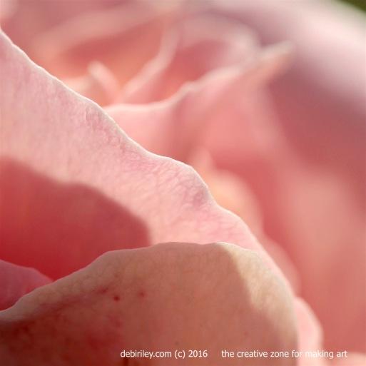 rose macro photo, creative artistic expression, debiriley.com