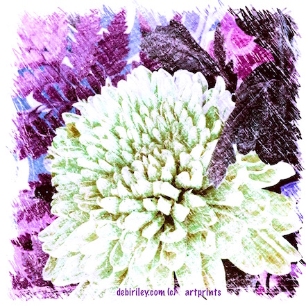 digital art photo flower print purples, debiriley.com