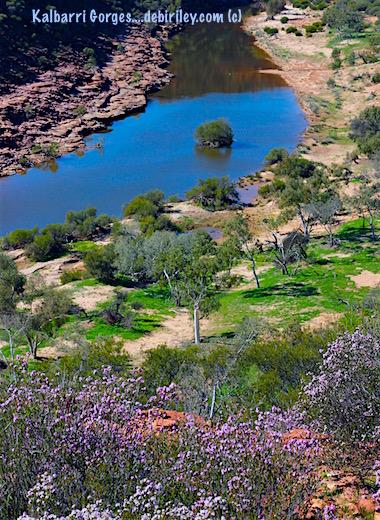 murchison river wildflowers of Kalbarri, W.A. debiriley.com travel Australia photographs