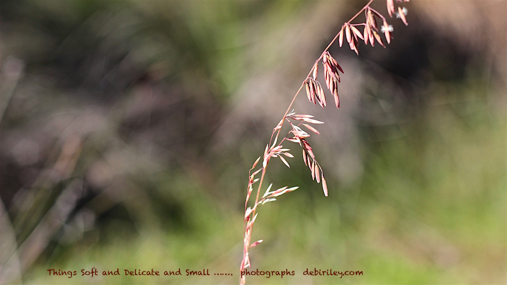photograph spring grasses, debiriley.com