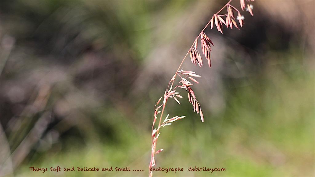 photograph spring grasses, debiriley.com