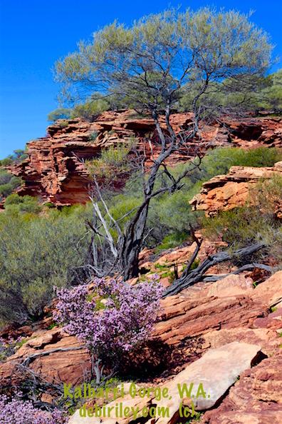 Kalbarri Gorges, Western Australia sightseeing, wildflowers in Australia, debiriley.com