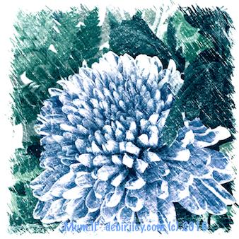 chrysanthemums in blues, antique print look, debiriley.com
