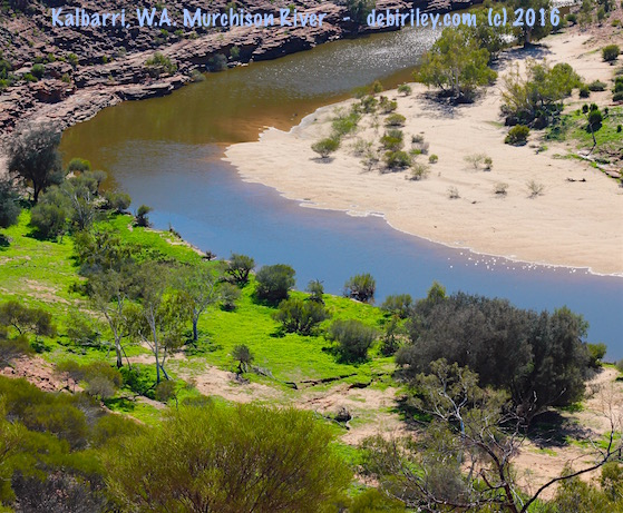 Kalbarri gorge oasis, Western Australia travel, outback sightseeing, debiriley.com