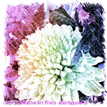 Beautiful Face of a Flower, digital art print, debiriley.com