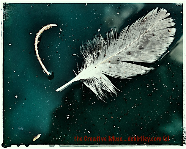 white dove grey feather floating in jade green water, photograph, debiriley.com
