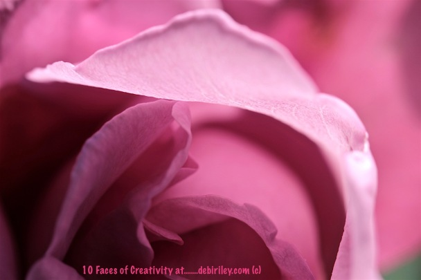 creative portrait of a rose, photograph, debiriley.com