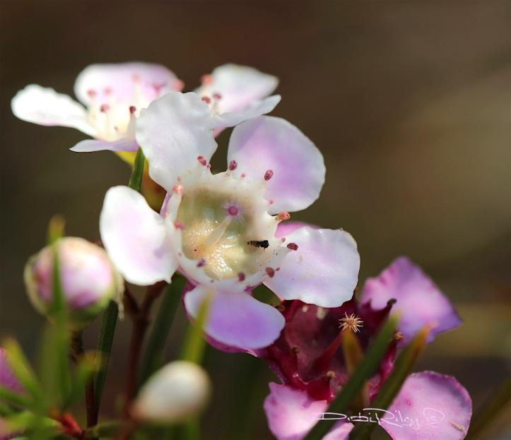 flowers to inspire, photograph, debiriley.com