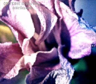 fun bright layers flower petal, digital photo, debiriley.com