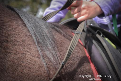 horse and rider unity, photo, debiriley.com