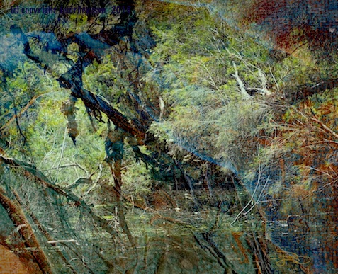 halloween dark bayou, photograph, digital art, debiriley.com