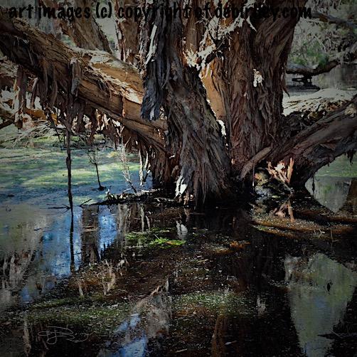 swamp photograph, haunting, dark photo halloween, debiriley.com