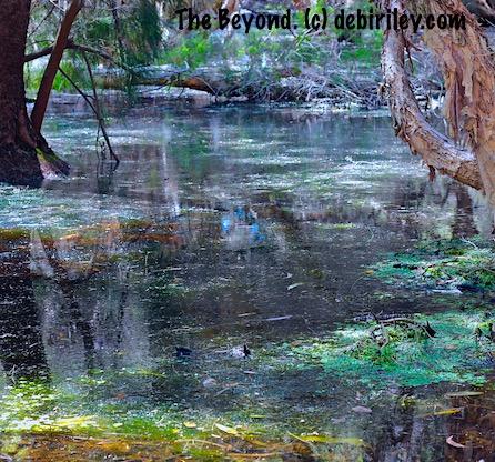 green swamp bayou, nature reserves photograph debiriley.com