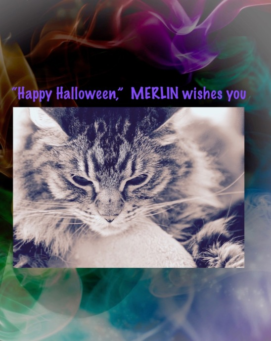 halloween cats, merlin, cat photos, cat art, debiriley.com