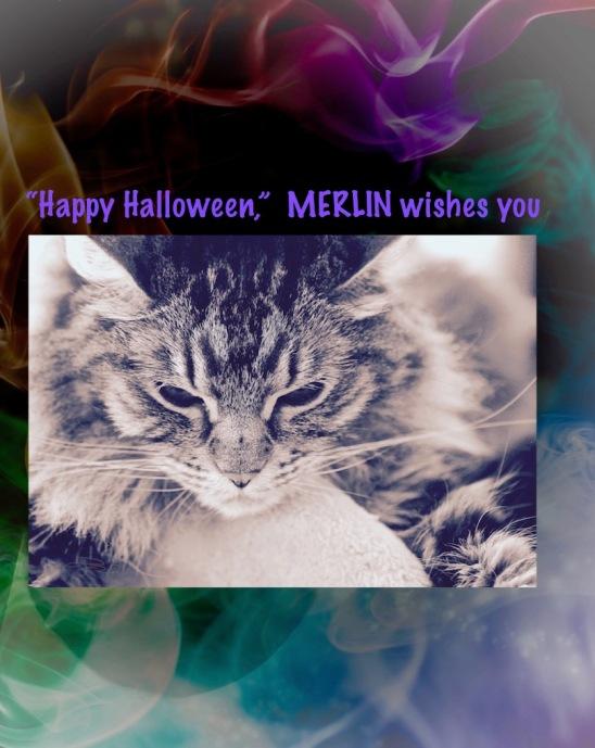 halloween cats, merlin, cat photos, cat art, debiriley.com