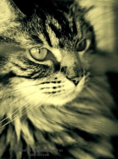 Merlin, enchanting cat, magic, halloween cat photo, debiriley.com