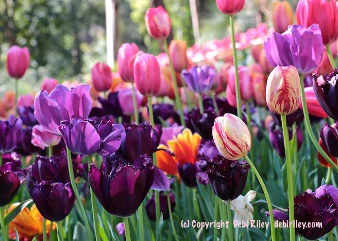 Spring Gardens Wow!