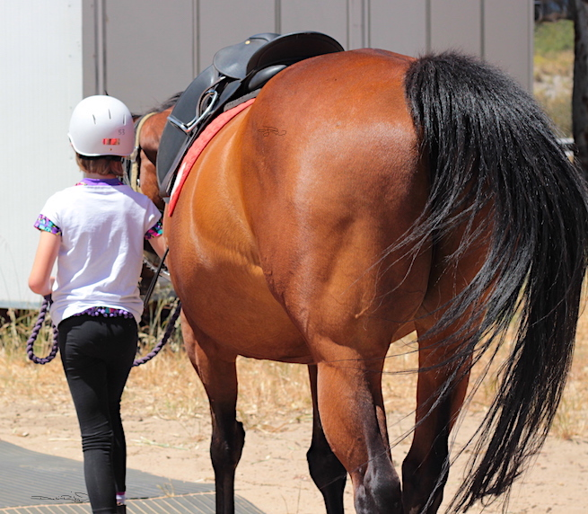 art forms, horse riding, horse photograph, debiriley.com