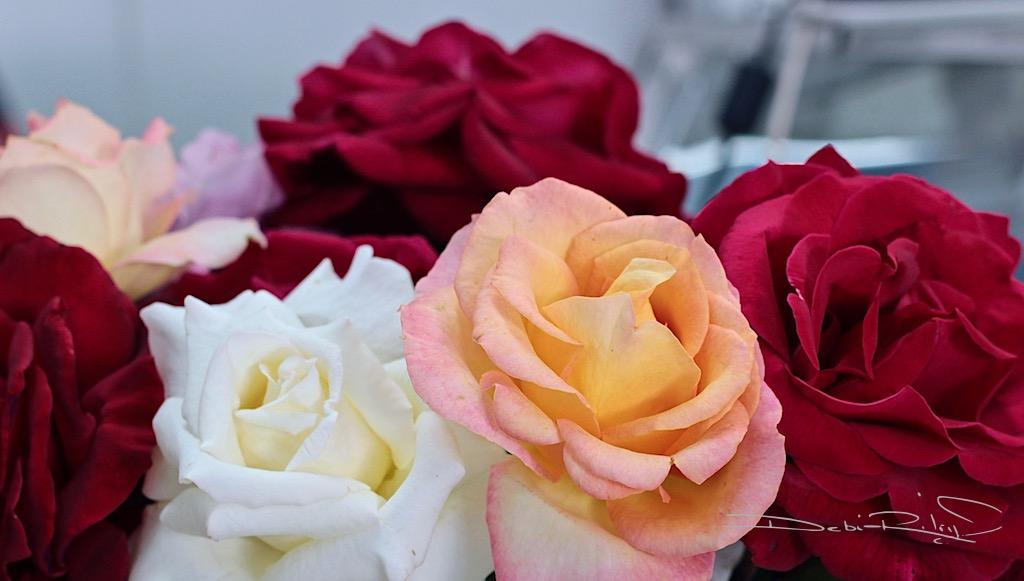 crimson roses photography, rose bouquet painting monotype, creative art, debiriley.com