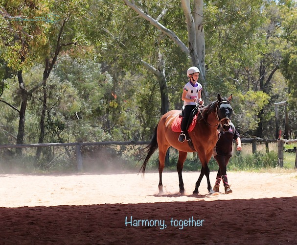 riding is an art form, partnership in horse riding, photo, debiriley.com