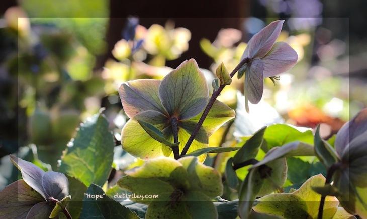 floral photography, emotive art photos, debiriley.com