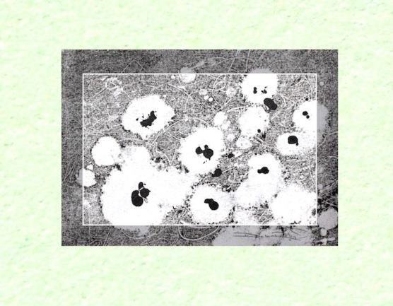 mint green monotype, field of flowers, debiriley.com