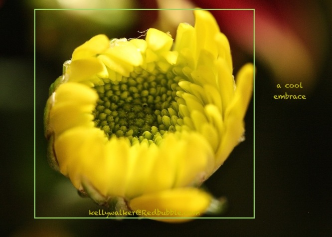 flower photography, kellywalker@Redbubble.com, color therapy with yellow, healing with flowers, debiriley.com