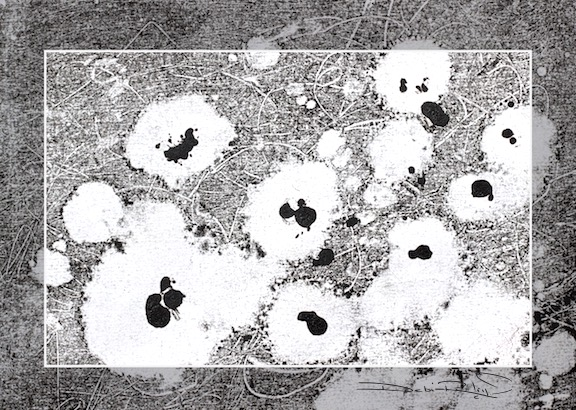 monochrome monotype, field of flowers, art in black and white, debiriley.com