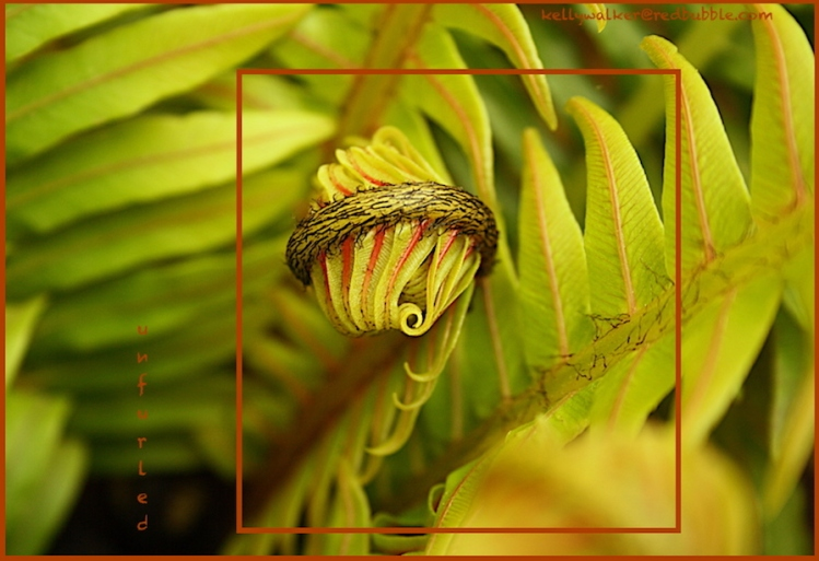 nature photography, green fern design, zen stroll, debiriley.com