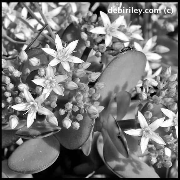 Roethke, keep the light, flower photography,
