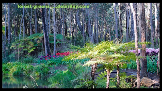 painting in the forest, walking in nature, painting trees and forest greens, painting with Daniel Smith watercolors, debiriley.com